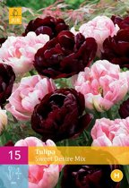 15 TULIPA SWEET DESIRE mix 11/12
