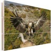 Vale gier met gespreide vleugels Vurenhout met planken 120x80 cm - Foto print op Hout (Wanddecoratie)
