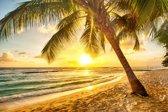 Papermoon Barbados Palm Beach Vlies Fotobehang 350x260cm 7-Banen