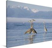Paradijskraanvogels lopen door het water Canvas 140x90 cm - Foto print op Canvas schilderij (Wanddecoratie woonkamer / slaapkamer)