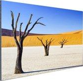 Boompjes in woestijn Aluminium 30x20 cm - klein - Foto print op Aluminium (metaal wanddecoratie)