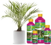 Wilma Palm voeding 1 ltr