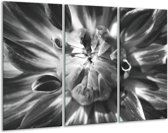 Glas schilderij Bloem | Zwart, Grijs | 120x80cm 3Luik | Foto print op Glas |  F006321