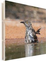 Rosse spotlijster neemt een bad in een vijver Vurenhout met planken 50x50 cm - Foto print op Hout (Wanddecoratie)