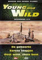 Young And Wild 1-3