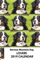 Bernese Mountain Dog Lovers 2019 Calendar