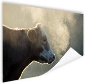Koe bij zonsopgang Poster 60x40 cm - Foto print op Poster (wanddecoratie woonkamer / slaapkamer) / Dieren Poster