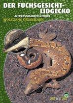 Der Fuchsgesicht-Lidgecko