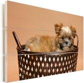 Een Yorkshire Terrier zit in een mand Vurenhout met planken 90x60 cm - Foto print op Hout (Wanddecoratie)