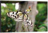 Dibond – Witte Vlinder– 90x60 Foto op Aluminium (Wanddecoratie van metaal)