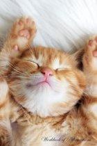 Cute Sleeping Kitten Workbook of Affirmations Cute Sleeping Kitten Workbook of Affirmations