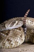 Rattlesnake Journal