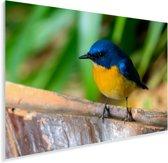 Prachtig gekleurde Azuurvliegenvanger op de rand van een hek Plexiglas 60x40 cm - Foto print op Glas (Plexiglas wanddecoratie)