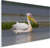 Rroze pelikaan zwemt in ondiep water Plexiglas 90x60 cm - Foto print op Glas (Plexiglas wanddecoratie)