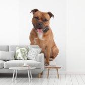 Fotobehang vinyl - Poserende Staffordshire Bull Terrier breedte 270 cm x hoogte 400 cm - Foto print op behang (in 7 formaten beschikbaar)
