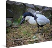 Schuitbekreiger met nestmateriaal Canvas 180x120 cm - Foto print op Canvas schilderij (Wanddecoratie woonkamer / slaapkamer) XXL / Groot formaat!