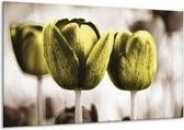 Glasschilderij Tulpen   Bruin, Groen   120x70cm 1Luik   Foto print op Glas    F002795