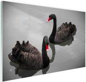 Zwarte zwanen Glas 90x60 cm - Foto print op Glas (Plexiglas wanddecoratie)