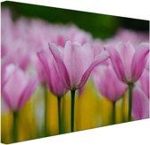 Tulpenbloesems Canvas 60x40 cm - Foto print op Canvas schilderij (Wanddecoratie woonkamer / slaapkamer) / Bloemen Canvas Schilderijen