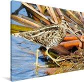 Een watersnip bij het water Canvas 160x120 cm - Foto print op Canvas schilderij (Wanddecoratie woonkamer / slaapkamer) XXL / Groot formaat!