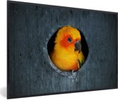 Foto in lijst - Een Zonparkiet zit in een nest in een boom fotolijst zwart 60x40 cm - Poster in lijst (Wanddecoratie woonkamer / slaapkamer)