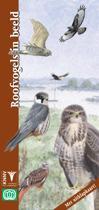 Roofvogels in beeld