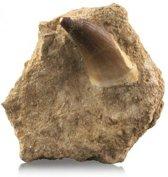 Fossiel Mosasaurustand