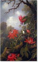 Kolibrie bij Bloemen - Vogel - Martin Johnson Heade - Schilderij op Canvas