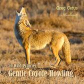 Gentle Coyote Howling in Wild Prairies