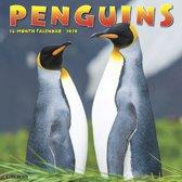 Pinguin Kalender 2020