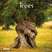 Bomen - Trees Kalender 2020