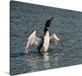 Ijsduiker met uitgestrekte vleugels Canvas 30x20 cm - klein - Foto print op Canvas schilderij (Wanddecoratie woonkamer / slaapkamer)