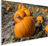 Grote pompoenen liggend op het land Plexiglas 60x40 cm - Foto print op Glas (Plexiglas wanddecoratie)