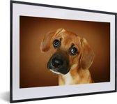 Foto in lijst - Portret van een goudbruine Beagle fotolijst zwart met witte passe-partout klein 40x30 cm - Poster in lijst (Wanddecoratie woonkamer / slaapkamer)