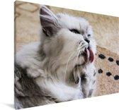 Kleurrijke Exotic kat op de vloer Canvas 180x120 cm - Foto print op Canvas schilderij (Wanddecoratie woonkamer / slaapkamer) / Huisdieren Canvas Schilderijen XXL / Groot formaat!