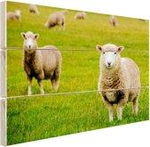 Schapen in een weiland Hout 60x40 cm - Foto print op Hout (Wanddecoratie)