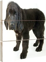Schattige zwarte puppy Hout 120x80 cm - Foto print op Hout (Wanddecoratie)