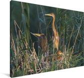 Purperreiger in zijn nest in Duitsland Canvas 120x80 cm - Foto print op Canvas schilderij (Wanddecoratie woonkamer / slaapkamer)