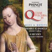 Quam Pulchra Es & Motets