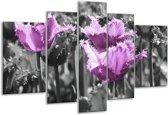 Glasschilderij Tulpen   Paars, Wit, Grijs   170x100cm 5Luik   Foto print op Glas    F002801