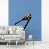 Fotobehang vinyl - Foto van een staartmees met een blauwe hemel breedte 300 cm x hoogte 360 cm - Foto print op behang (in 7 formaten beschikbaar)