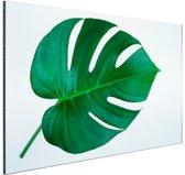 Botanische print van een gatenplant Aluminium 90x60 cm - Foto print op Aluminium (metaal wanddecoratie)
