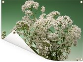 Een sierlijke bloeiende valeriaan Tuinposter 40x30 cm - klein - Tuindoek / Buitencanvas / Schilderijen voor buiten (tuin decoratie)
