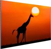 Giraffe bij zonsondergang Aluminium 30x20 cm - Foto print op Aluminium (metaal wanddecoratie)