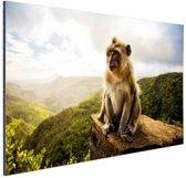 Aap op Mauritius Aluminium 90x60 cm - Foto print op Aluminium (metaal wanddecoratie)