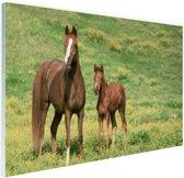 Bruin paard met jong Glas 30x20 cm - klein - Foto print op Glas (Plexiglas wanddecoratie)