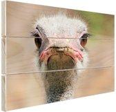 Struisvogel Portret van voren Hout 30x20 cm - klein - Foto print op Hout (Wanddecoratie)