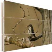 Foto van een bonte vliegenvanger in Zuid-Afrika Vurenhout met planken 30x20 cm - klein - Foto print op Hout (Wanddecoratie)