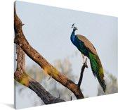 Blauwe pauw in een boom Canvas 140x90 cm - Foto print op Canvas schilderij (Wanddecoratie woonkamer / slaapkamer)