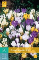 Crocus species mix - kleinbloemige krokus mix - 2 sets